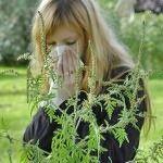 Як вилікувати алергію на амброзію народними засобами