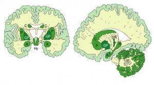 Дослідники працюють з потенційно новим препаратом для лікування хвороби альцгеймера