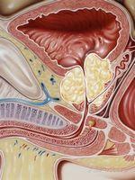 Які препарати для лікування хронічного простатиту входять в курс лікування?
