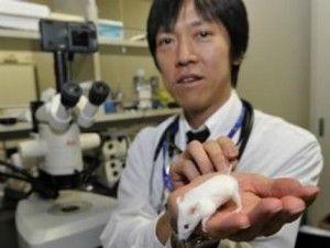 Ліки для онкозахворювань показали многобещающіе результати в лікуванні хвороби альцгеймера на мишачої моделі