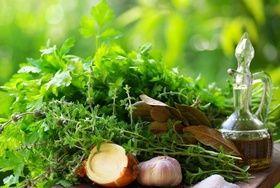 Лікарські рослини в лікуванні застуди
