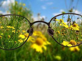 плоди обліпихи крушиновидной, трава очанки лікарської, квітки календули лікарської, прополіс, стевія, мед натуральний