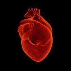 Перші ознаки і лікування інфаркту міокарда