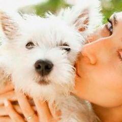 Ліки від алергії для собак
