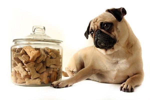 Лікування алергії у собак народними засобами
