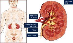 Класифікація та стадії раку нирки