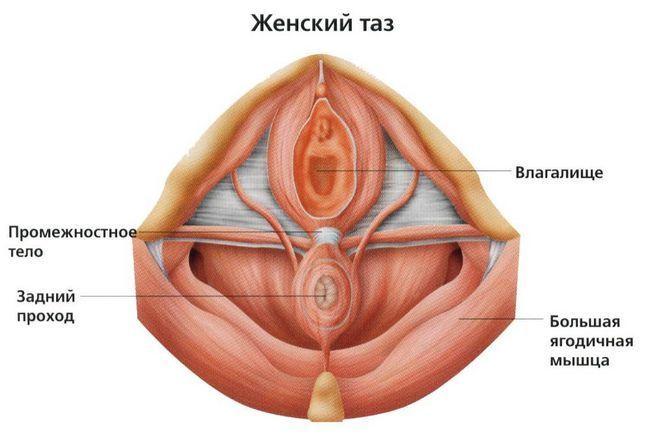 Захист тазового дна під час вагітності